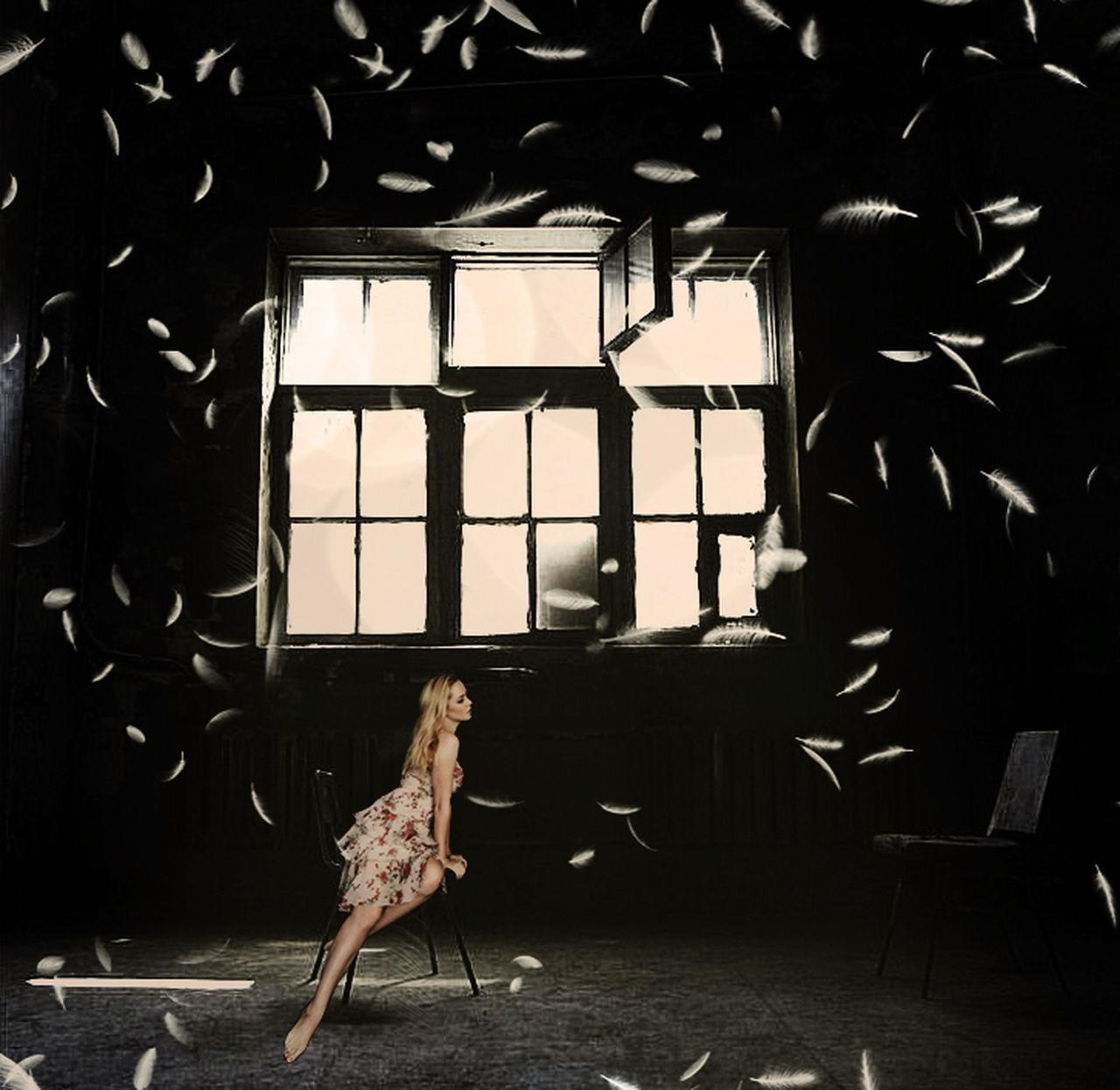 window, animal themes, indoors, bird, no people, one animal, day, domestic animals, close-up