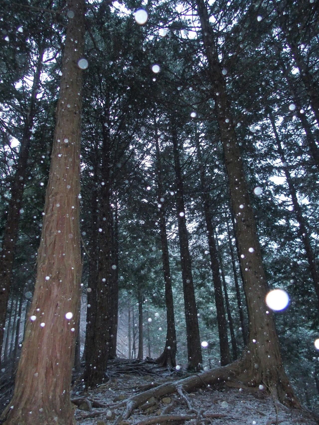 丹沢もついに雪です( ̄∀ ̄) Landscape Nature Trees Snow