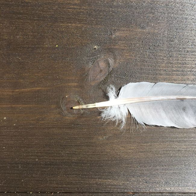 Feather  Still Life Still Life Photography Sunlight Light Up Your Life EyeEm Nature Lover Nature_collection
