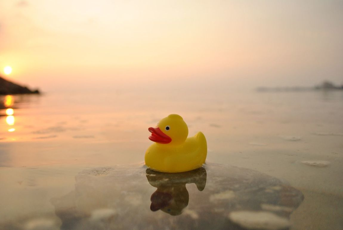 hello eyeem🎵 Water Sunset Reflection Horizon Over Water Toy Sea Tranquil Scene Rubber Duck Tranquility Waterfront Scenics Yellow Beak Beauty In Nature Nature Focus On Foreground Standing Water Swimming Vibrant Color Non-urban Scene OPD EyeEm First Eyeem Photo Beauty In Nature Nature