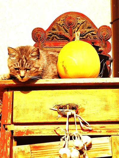 Cat♡ Lastsunday Autumn Colors Sunnyday☀️ Lazy Day Indoors  No People Table Close-up Day first eyeem photo
