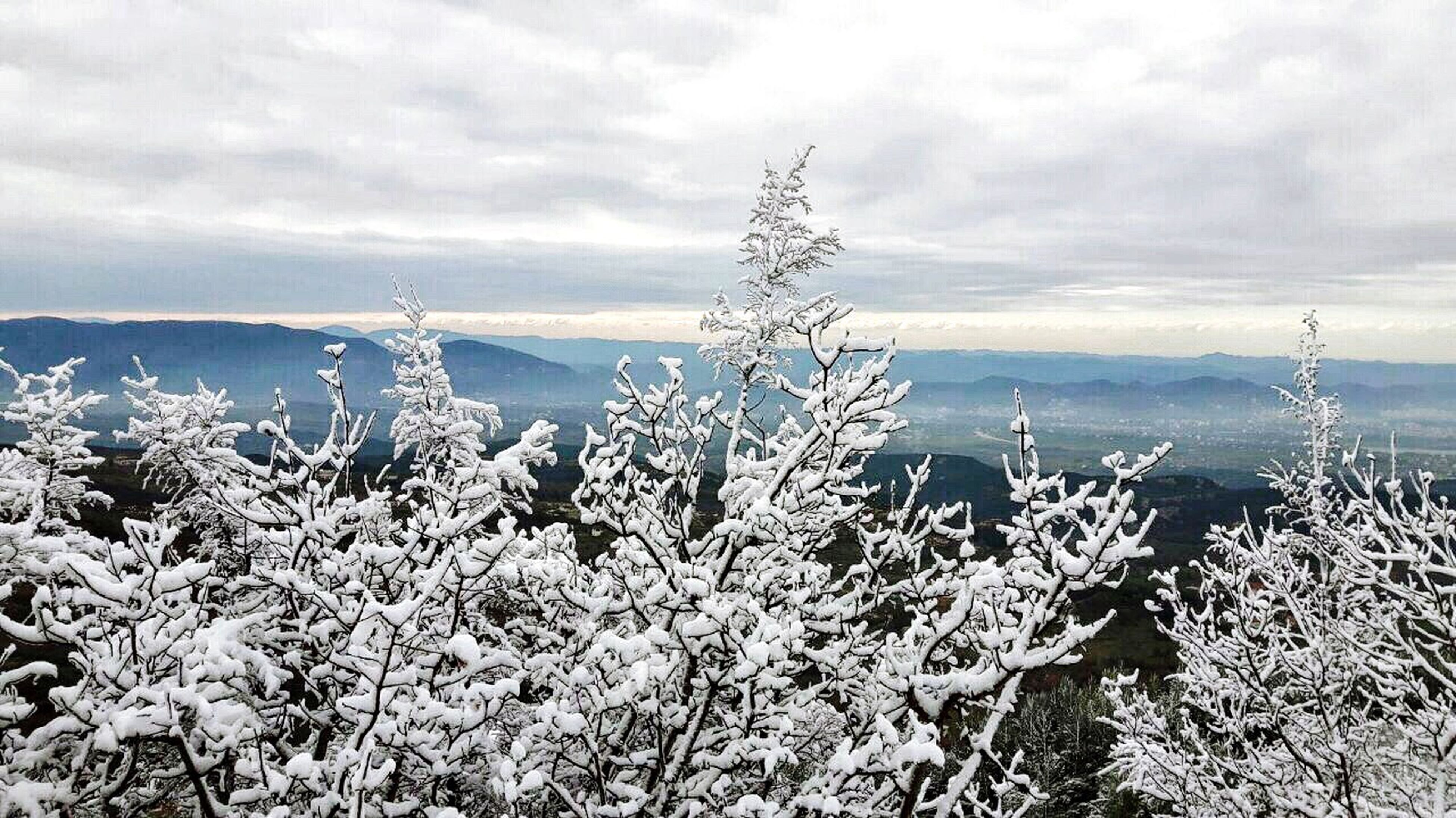 cold temperature, weather, winter, season, snow, scenics, plant, nature, tranquil scene, beauty in nature, close-up, growth, sky, frozen, tranquility, cloud, idyllic, focus on foreground, fragility, majestic, day, branch, non-urban scene, frost, snow covered, cloud - sky, outdoors, botany, no people