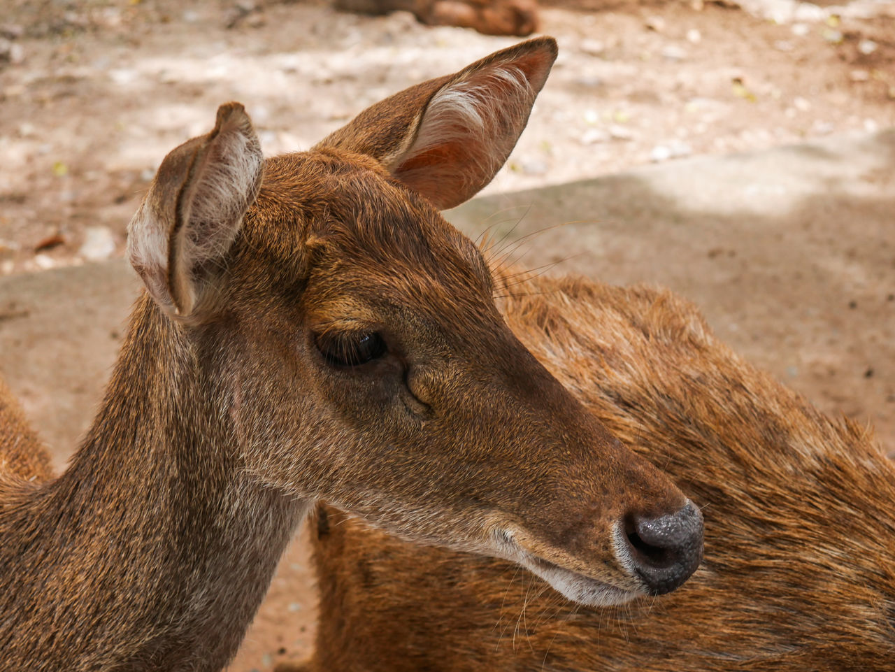 animal themes, animals in the wild, focus on foreground, mammal, one animal, animal wildlife, day, outdoors, no people, nature, close-up, portrait