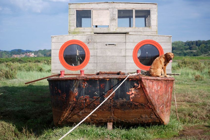 Bonzo @bonzosworld Instagram Rusty Sky Nature Red Lab Red Labrador Lab Labrador Labrador Retriever Outdoors Salt Marsh Seaside Marsh Boat Barge Barge Boat House Boathouses From My Point Of View