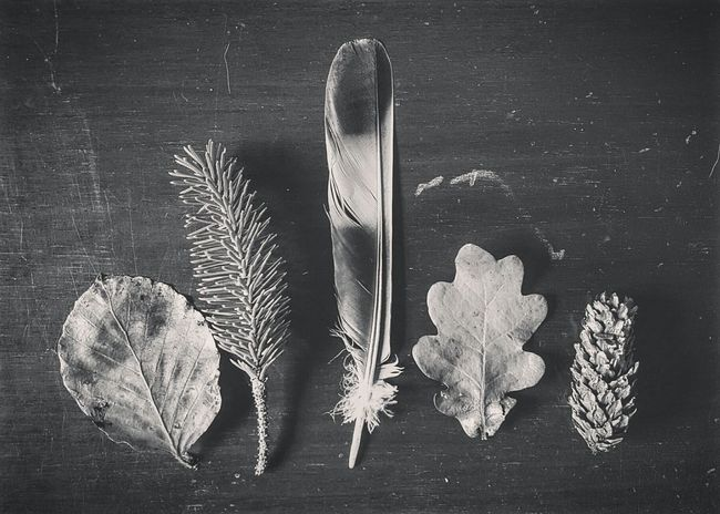 Black & White Nature Things Organized Neatly Autumn Forest Collection Samsung Galaxy S6 Edge
