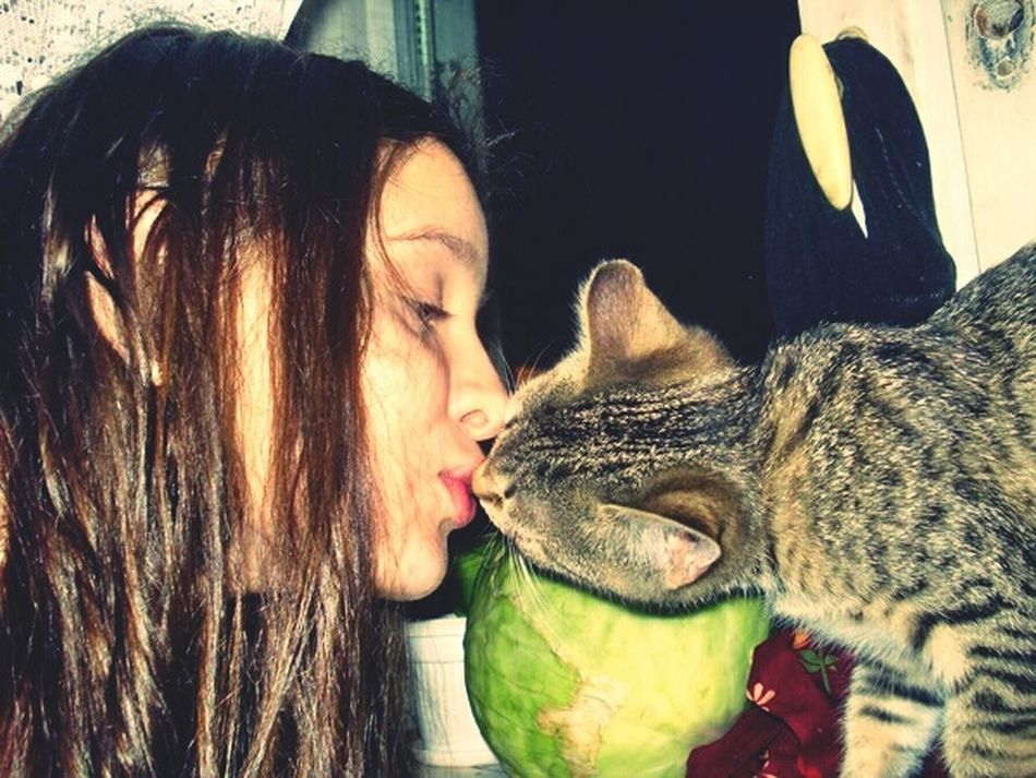 Cat Gerl Kiss Frends
