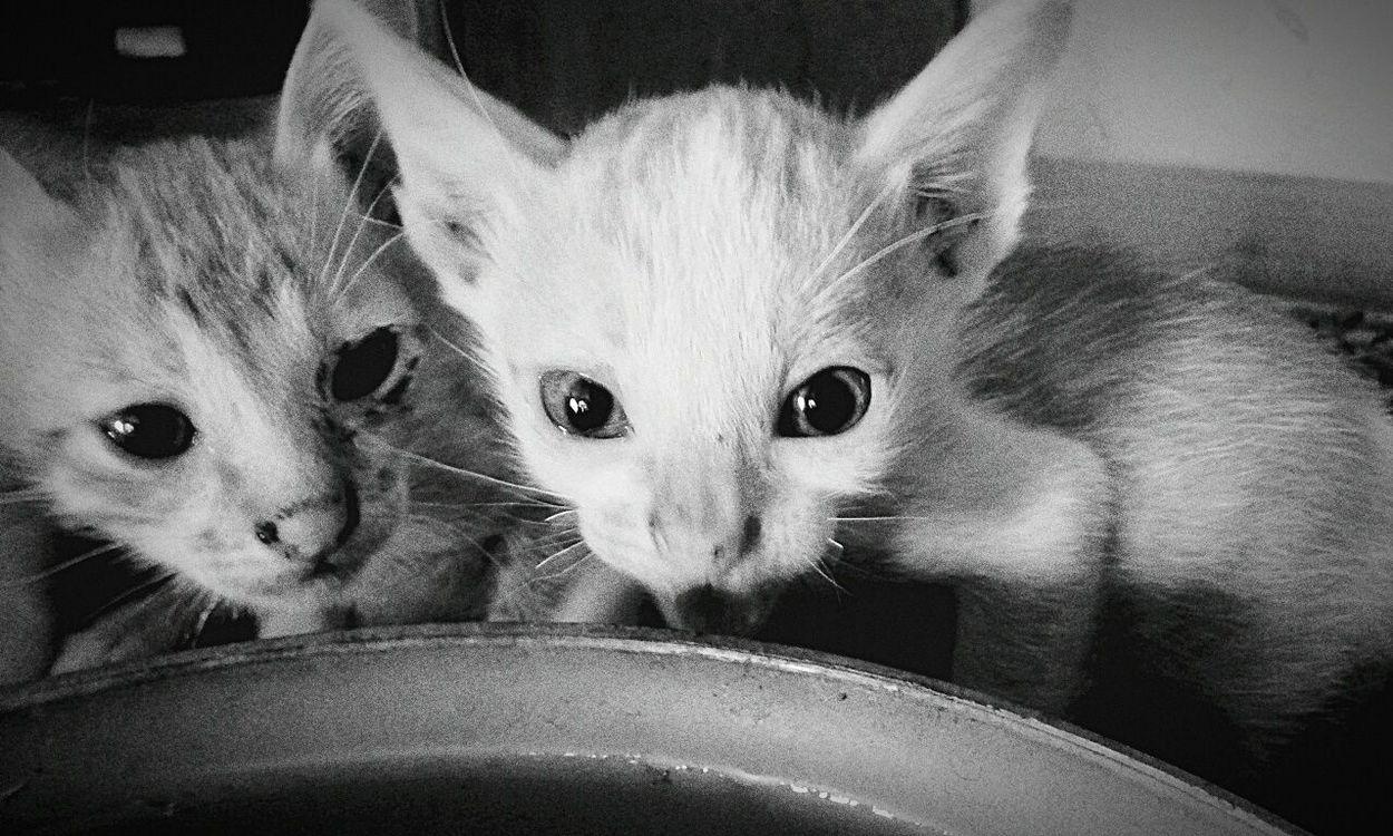 Littel pet Intimidated Littelpet Cats 🐱 Black & White I Love My Cat ❤
