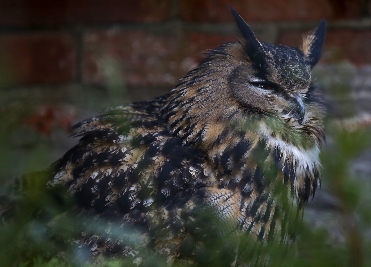 Beautiful stock photos of owl, Animal Themes, Animals In The Wild, Beauty In Nature, Bird