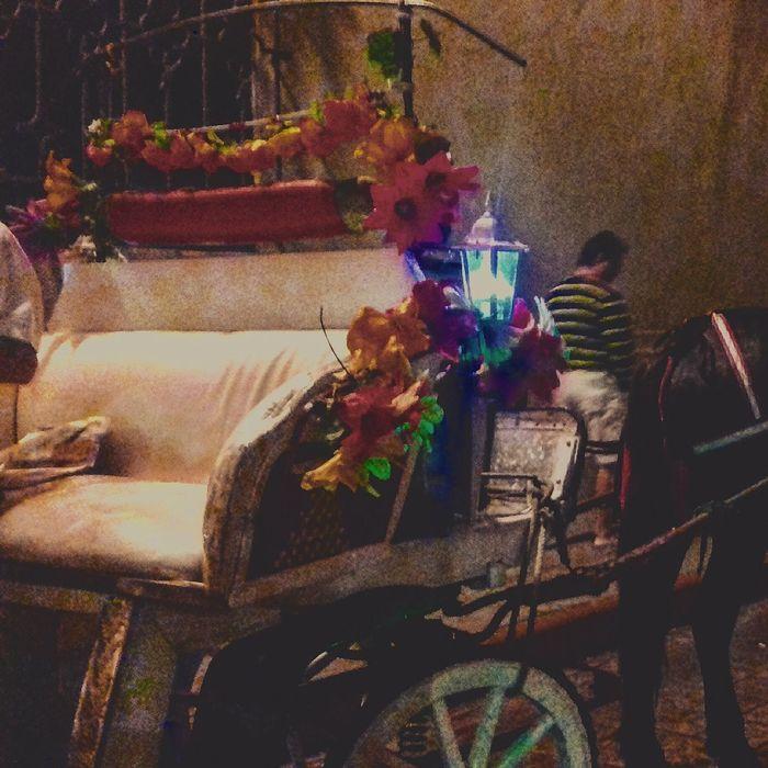 Adapted To The City Mérida Yucatán Cultura Mexicana Tradiciones Mexicanas Estoesmexico Coloresdemx