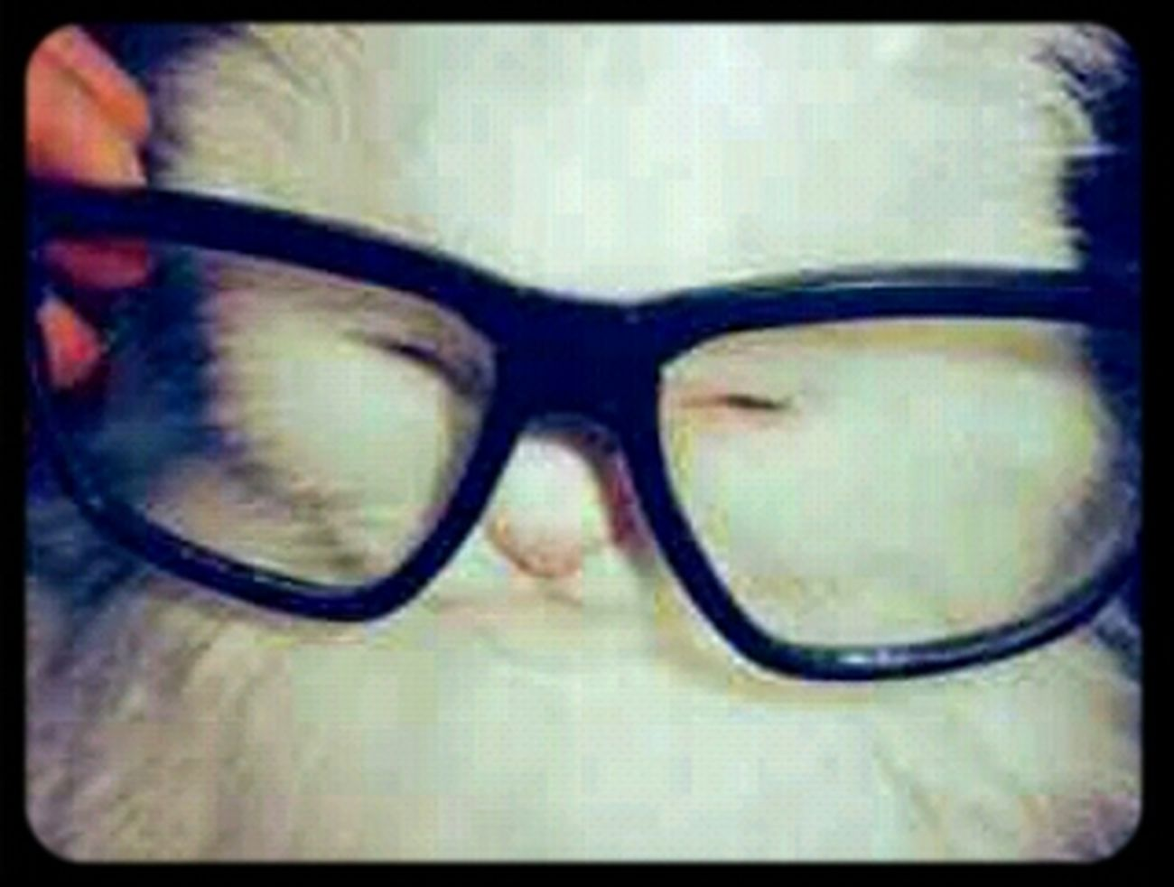 Hipsta Big Glasses Hipterlove Fluffykitty Hipstacat