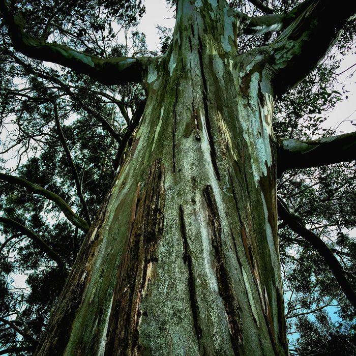 Tree Ireland Tree TreePorn Trees Branches Outdoors NiceShot EyeEm Nature Lover Quick Pic Trail Popular Photos Outdoor Photography Ireland🍀 Ireland Ground Level View Lookingup