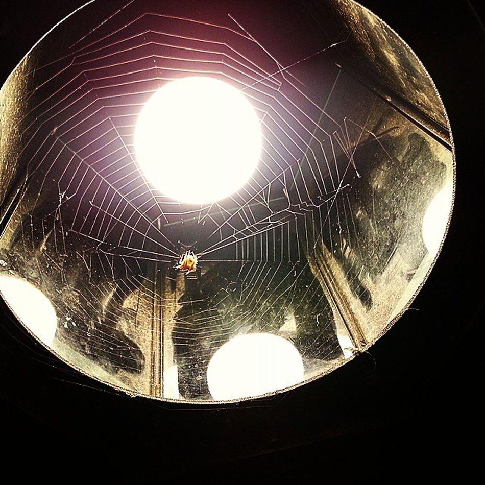 Spider Cobweb Casa Lampione Luce Filodiseta Caccia Predatore