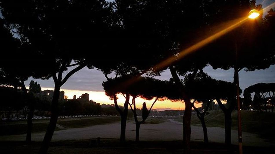 Dettaglidiroma LOVES_ROMA_ LOVES_LAZIO_ LOVES_UNITED_LAZIO Loves_lazio Loves_united_roma Loves_roma Igersroma Visitroma Myrome Lazioisme Igersitalia Volgoroma Volgoitalia Bestlaziopics Bestitaliapics Rionideroma Visititalia Earth_escape Mylittleitaly Cometorome Sunrise Sun Sky Rome italy tree lifeisgood