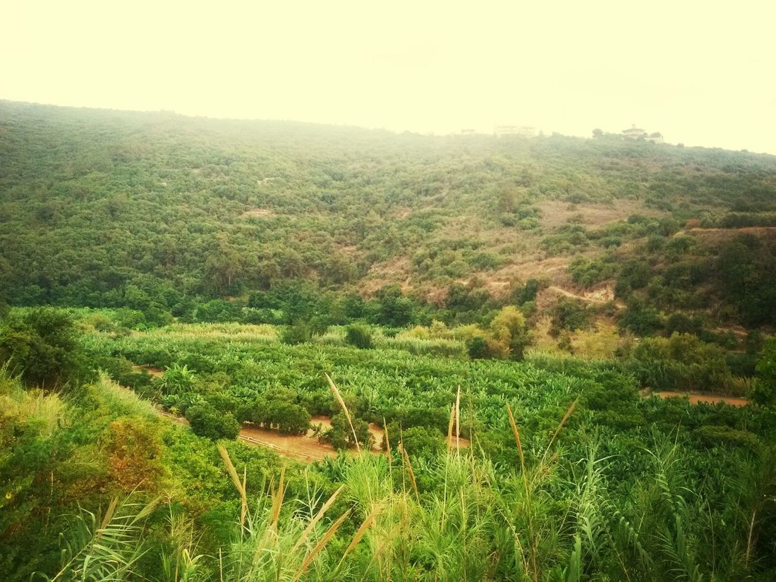 Damour Land Scape