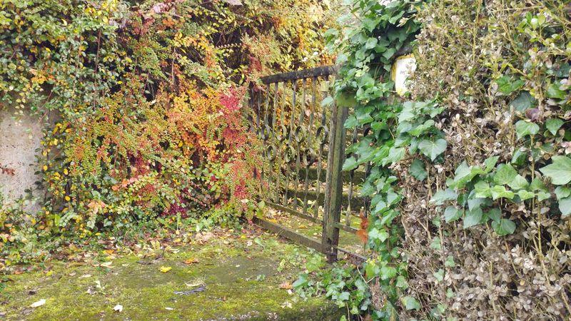 #colours #gate #heaven #invade #cousins #swimming #reunion #Nature  #photo #telephone #walking