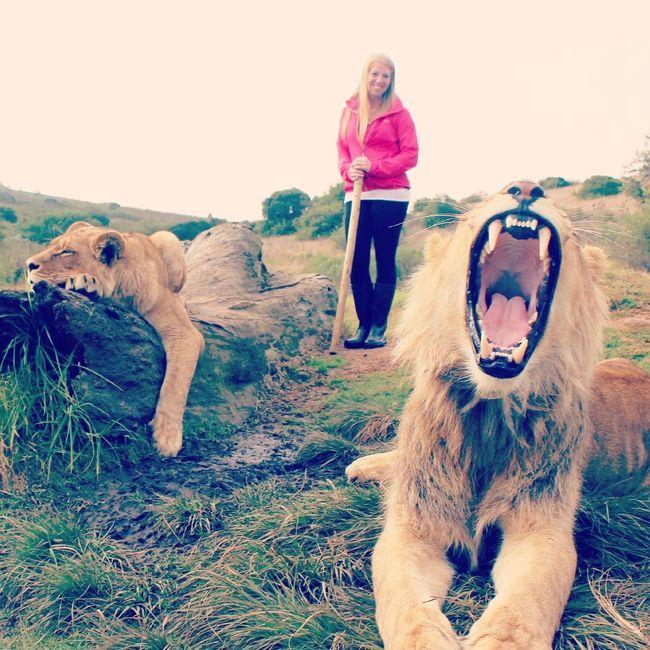 South Africa Africa African African Beauty Lion Lions Fierce Fiercefelines Pink Fearless Teeth Roar EyeEm Best Shots