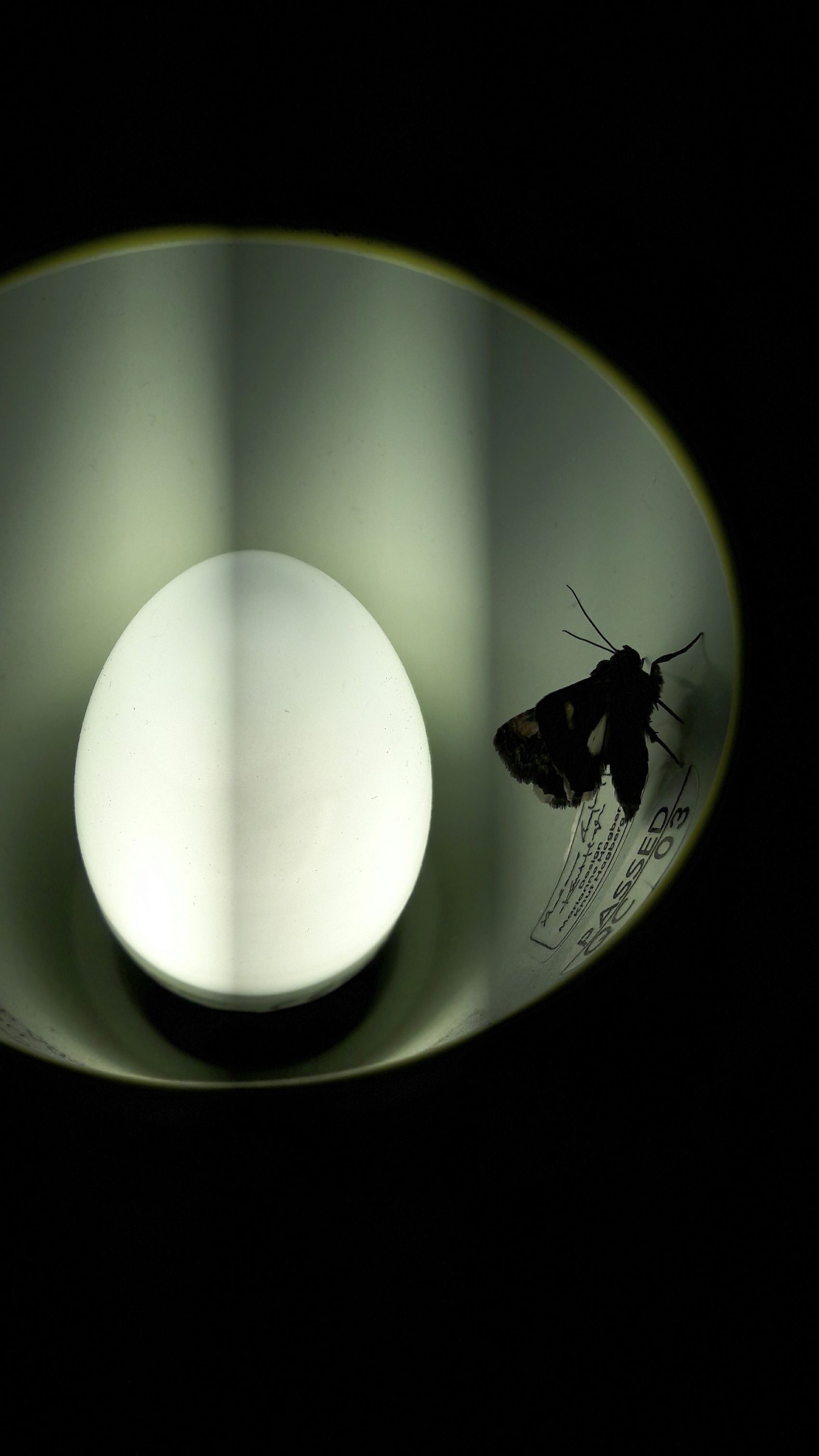 Insect Light Abstract Different Vision Lines
