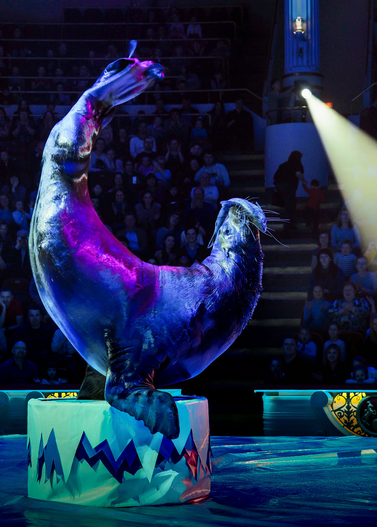 Russia, Moscow, circus, Russian circus, Nikulin Circus, sea lion Adult Adults Only Circus Day Indoors  Moscow Nikulin Circus One Man Only One Person Only Men People Performance Representing Russia Russian Circus Sea Lion