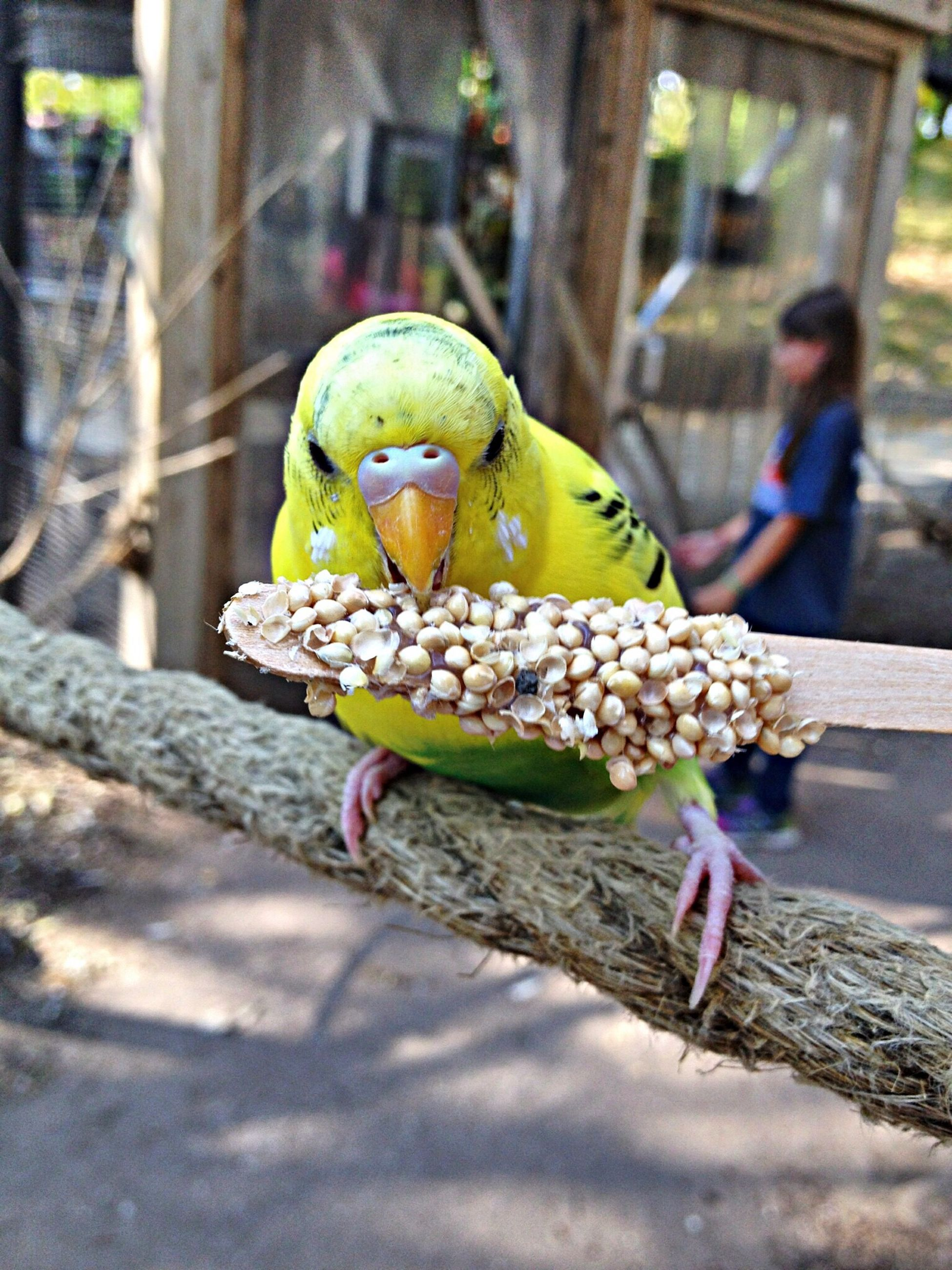 animal themes, animals in the wild, one animal, wildlife, bird, focus on foreground, perching, parrot, close-up, zoo, animals in captivity, beak, full length, lizard, reptile, side view, outdoors, day, animal head, branch