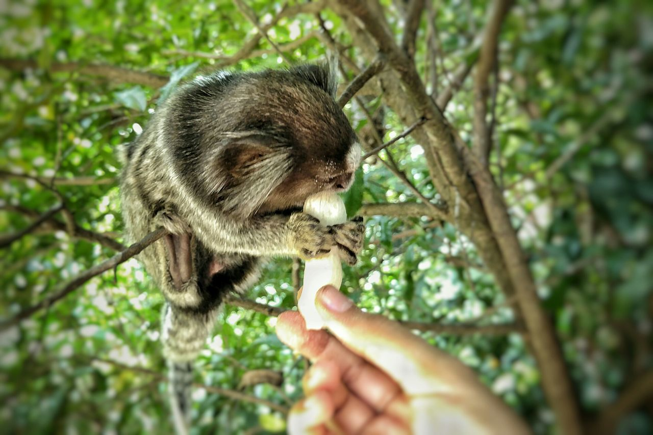 Adapted To The City Human Hand Human Body Part Holding One Animal Real People Animals In The Wild Animal Themes Lifestyles One Person Mammal Care Animal Wildlife Outdoors Day Nature Close-up Beauty In Nature Nature Green Color Monkey