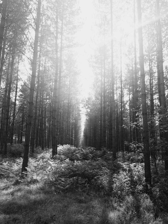 Forest Woods A Walk In The Woods Perspectives Black & White Glitch Learn & Shoot: Leading Lines