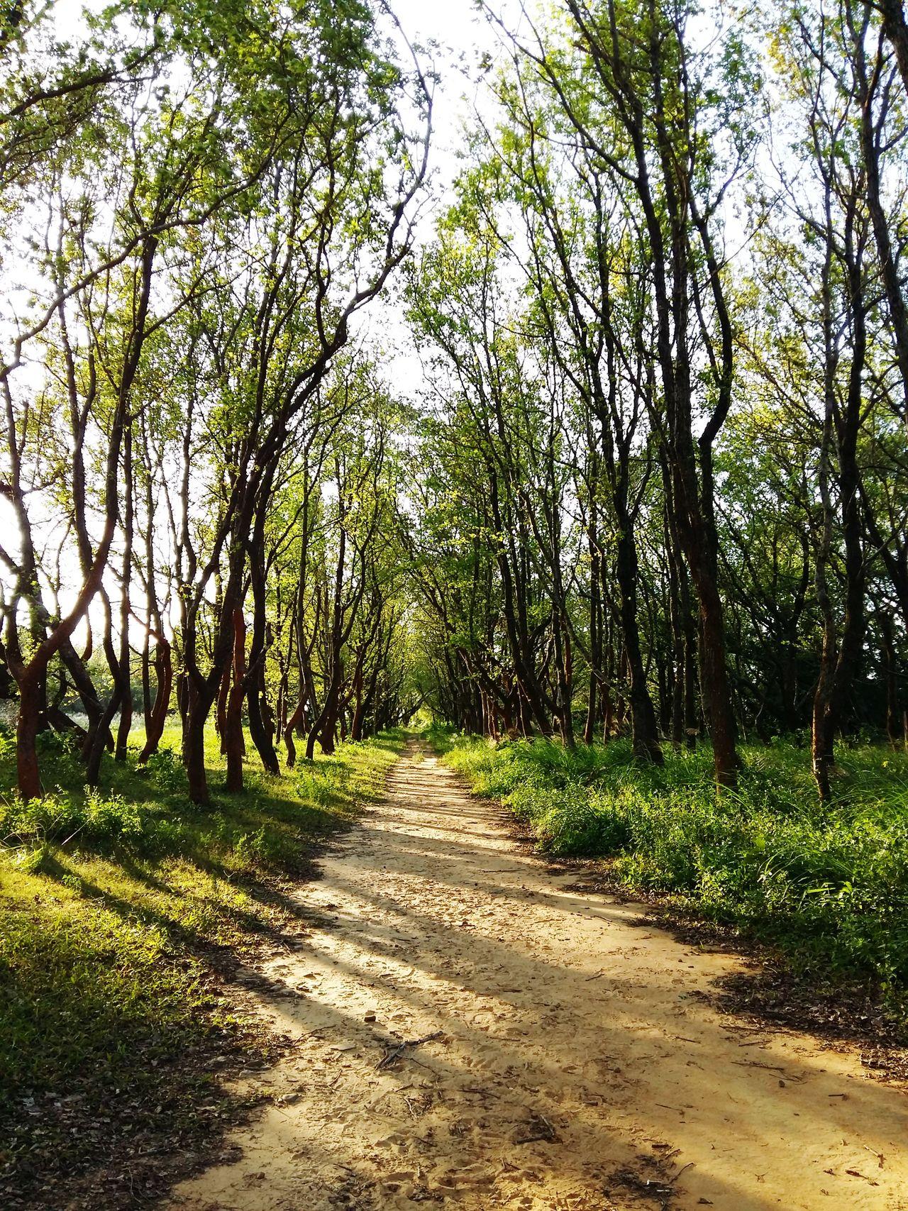 楓香林 Nature Uncharted Maple Forest Taiwan Miaoli Trees Back Yard