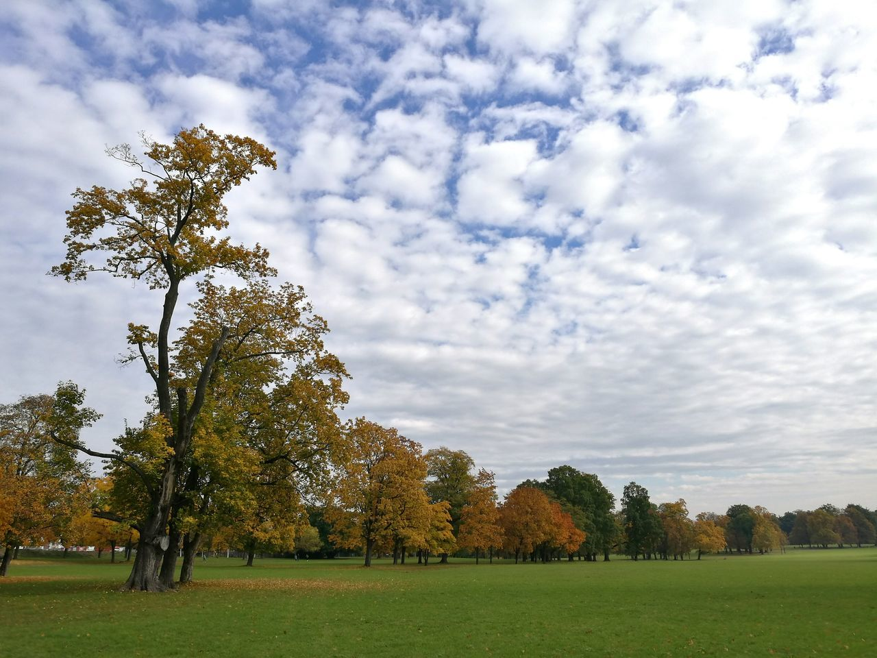 tree, nature, beauty in nature, tranquility, sky, grass, cloud - sky, tranquil scene, scenics, growth, no people, field, day, landscape, outdoors