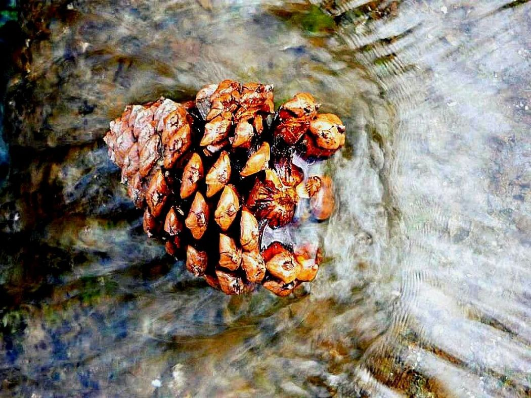 Nature Outdoors Water Pine Cone Day