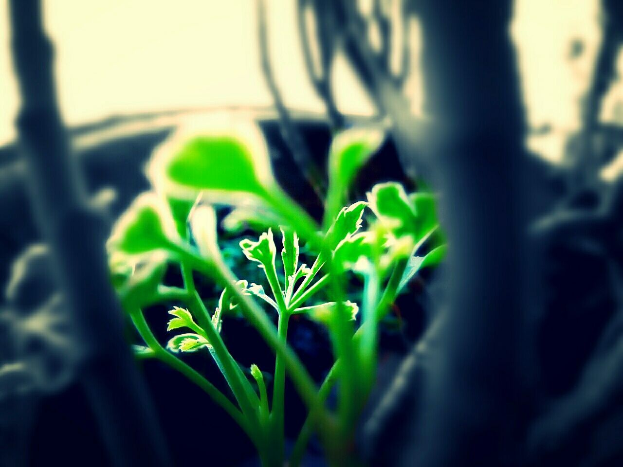 growth, plant, nature, leaf, green color, close-up, selective focus, day, no people, sunlight, outdoors, freshness, beauty in nature, fragility
