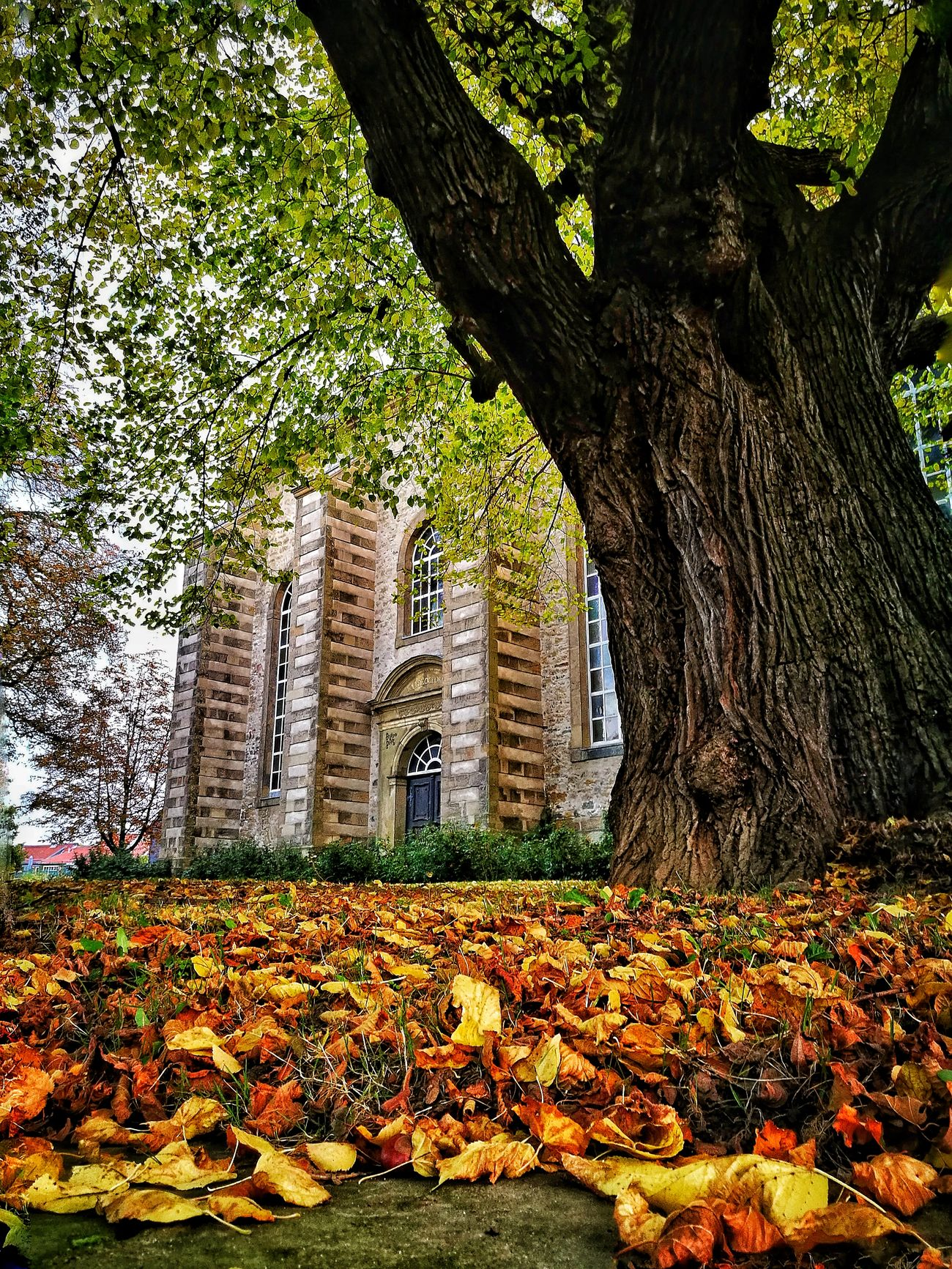 Tree Growth No People Leaf Nature Outdoors Day Architecture Nature Beauty In Nature Autumn 2016 Autumn🍁🍁🍁 Goslar Building Exterior Travel Destinations Autumn