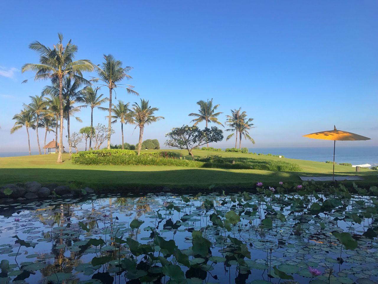 The Great Outdoors - 2017 EyeEm Awards Beauty In Nature Nature Tranquil Scene Palm Tree Tranquility Water Growth Scenics Tree No People Outdoors Clear Sky Blue Day Landscape Bali Holiday Lily Pond Yellow Umbrella Travel Destinations Sky Plant Ocean View Morning Light