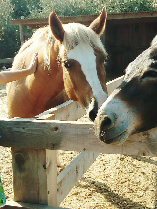 😚 😚 Horse Horse Life Barn Farm State Of Mind