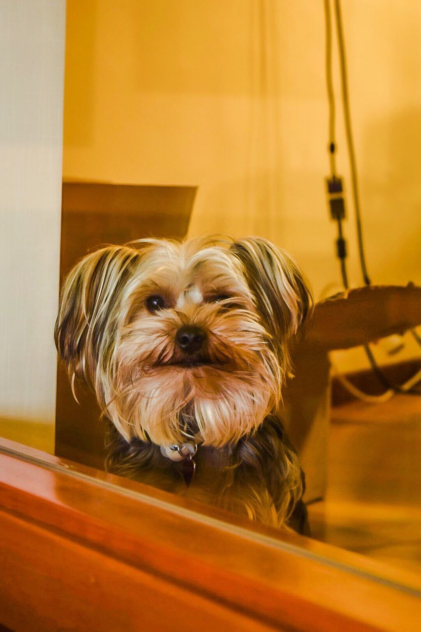 Close-Up Of Dog Indoors
