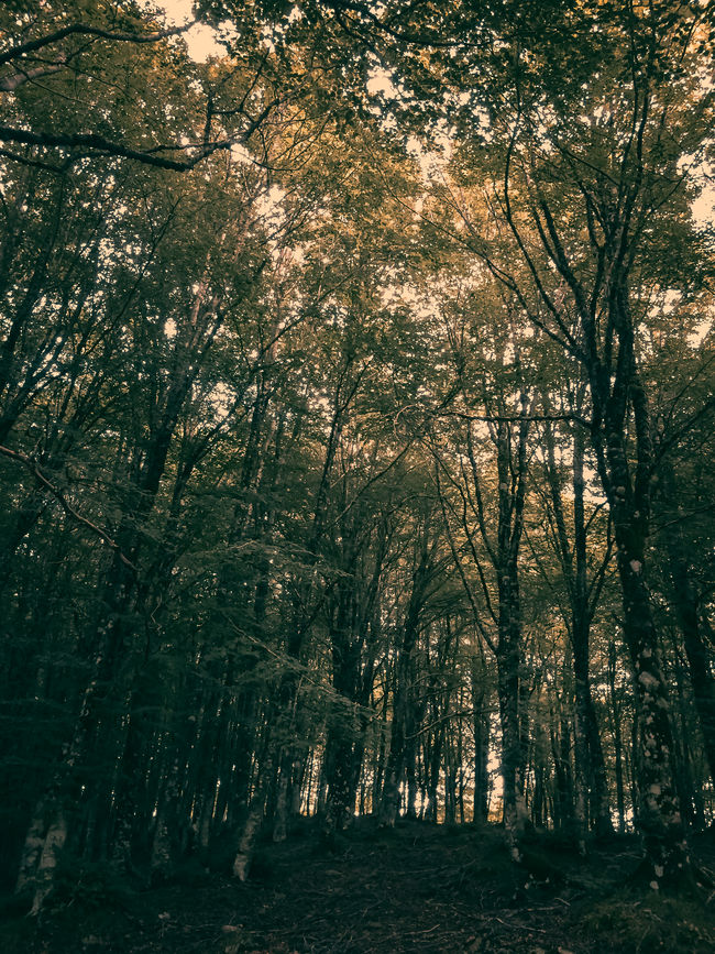 Beauty In Nature Day Forest Horizontal Nature No People Outdoors Scenics Tree
