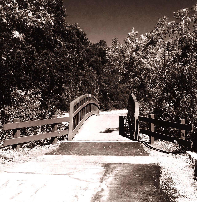 Hidden Gems  Quiet Quiet Moments Tranquility Tranquil Scene Trickling Water And Mossy Rocks Bridge Path Stillness