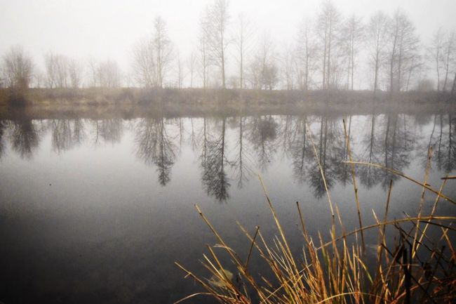 Foggy Day Water Reflections Taking Photos Outdoors Perspectives Mystic Schönwalde
