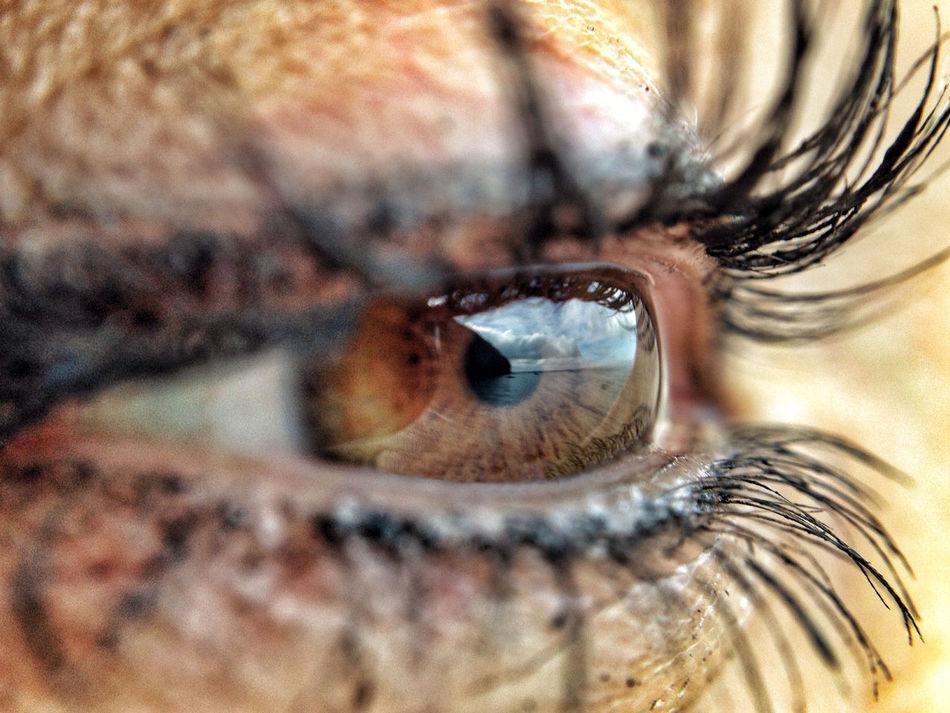 Eyes Ojos Reflection Iris