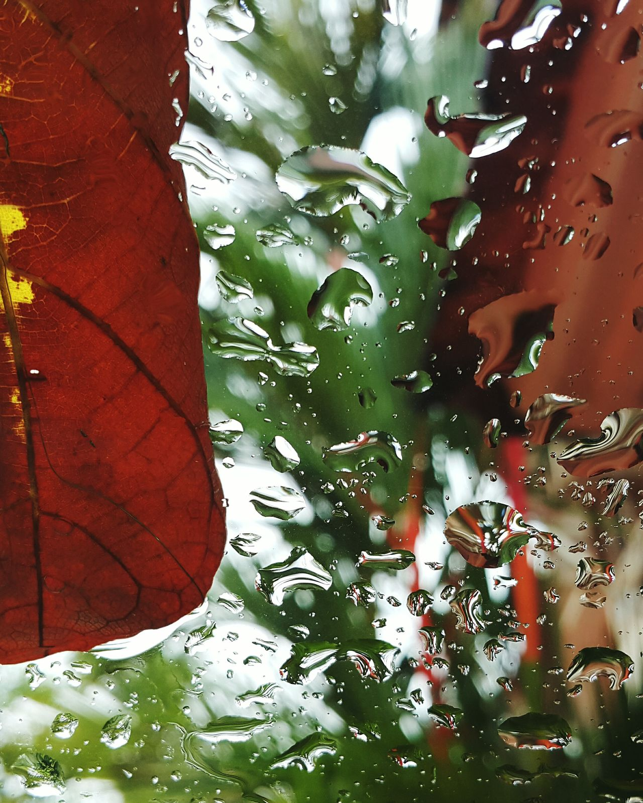 Red Palm Glass Rain Fallen Leaves Drops