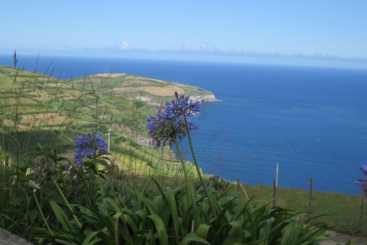 Agapanthus Atlantic Ocean Açores - São Miguel Beauty In Nature Blue Coastline Flower Horizon Over Water Sea Vacation Time Water