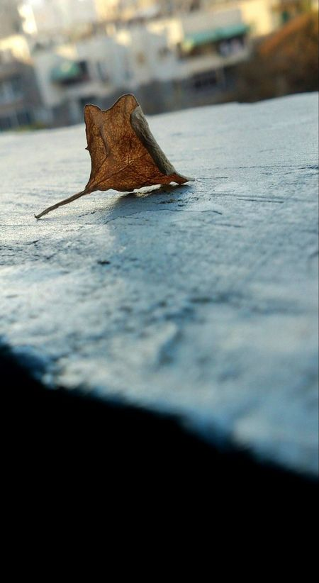 Auttum Autumn Leaves Happness Fall Beauty Eyem Best Shots Taking Photos Eyemphotography Nice View Nature Fall Leaves Lieblingsteil Lieblingsteil Miles Away EyeEmNewHere Nature Photography Photography Eyem Nature Lovers  Nature_collection EyeEm Best Shots Eyem Gallery Beachphotography Eyem Best Edits Eyem Nature Lovers  Nile_view EyeEm