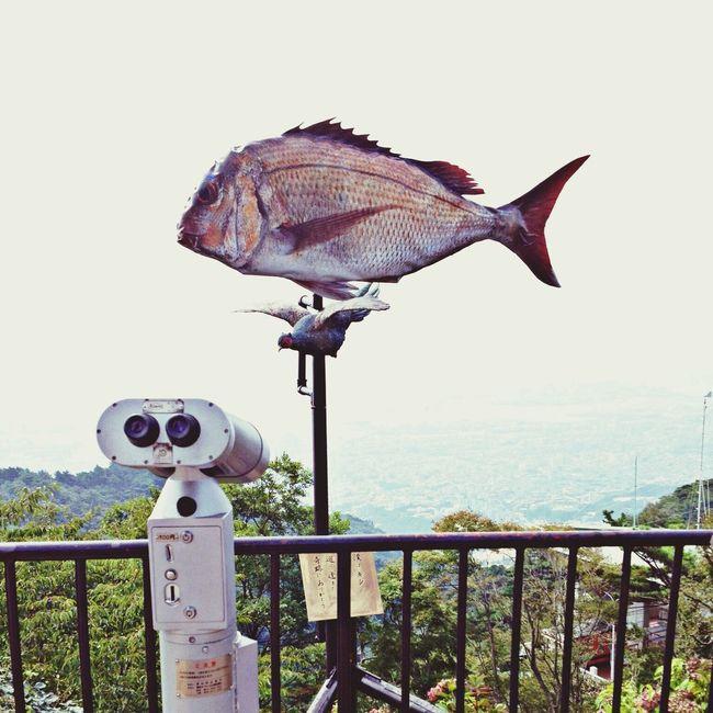 Art Rokko Meets Art Belvedere Sea Bream 六甲ミーツ・アート 芸術散歩2013 「山村幸則・キジ meets 鯛」