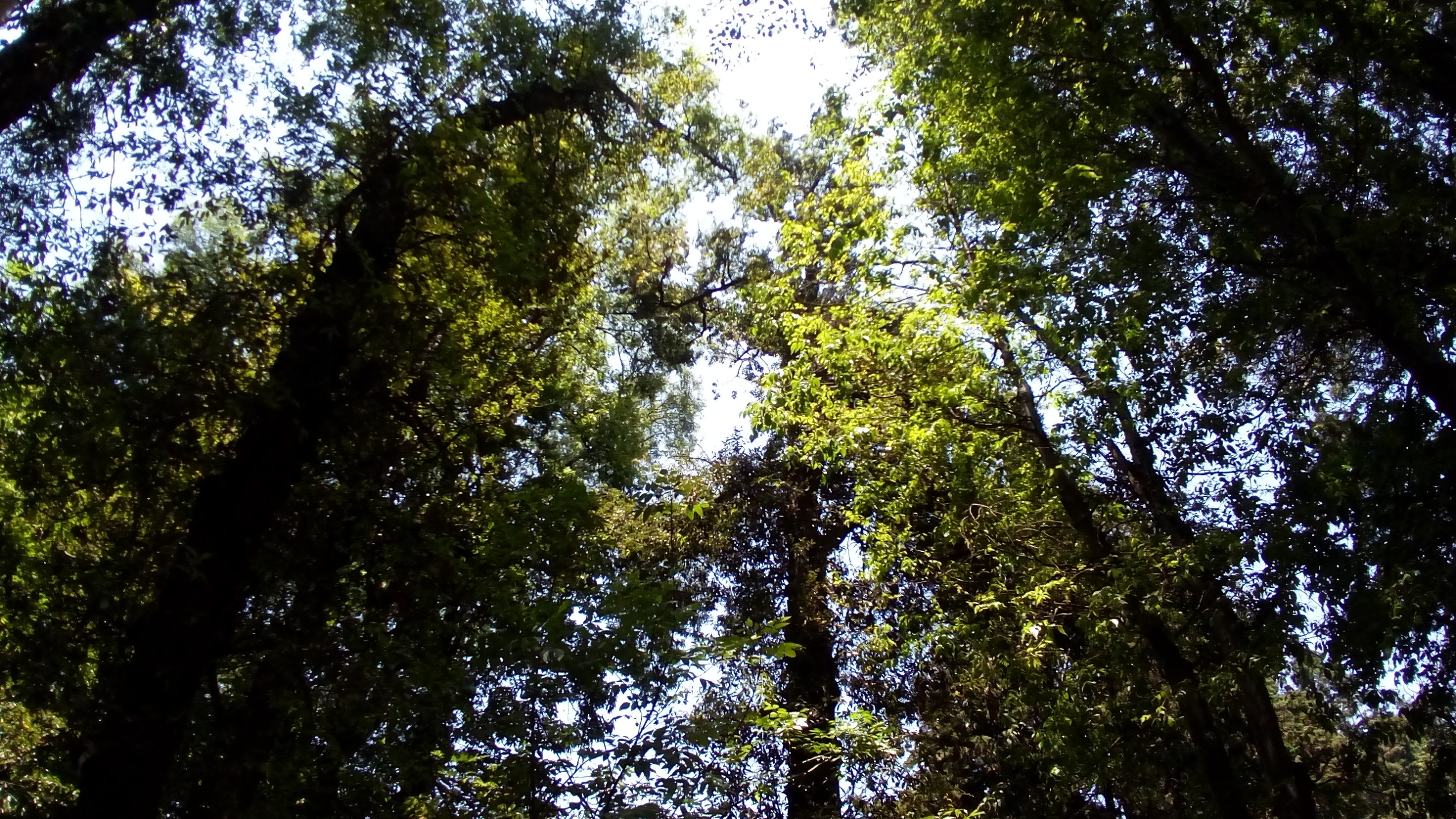 tree, growth, low angle view, nature, no people, forest, beauty in nature, green color, sky, bamboo grove, outdoors, backgrounds, day