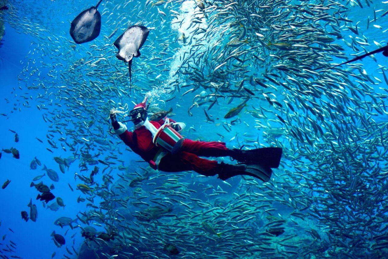 Beautiful stock photos of santa claus, Abundance, Adventure, Animal Themes, Animal Wildlife