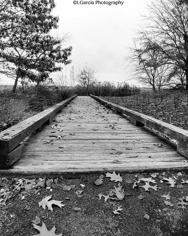 Wood bridge. Wood Bridge Wood Bridge EyeEm Best Shots - Black + White Shadows Eye4black&white  New Jersey Blackandwhite Newjersey LGarciaPhotography Meadowlands Environmental Research Center Eye4photography  EyeEm Best Shots Architecture Light And Shadow Iphone 6 Plus Black And White Photography Blackandwhite Photography EyeEm Best Shots - Nature Nature Trees Grass Monochrome Black And White Contrast