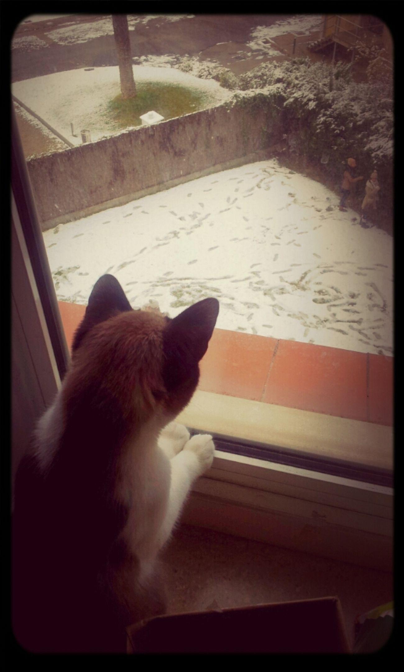 Kitty Snow