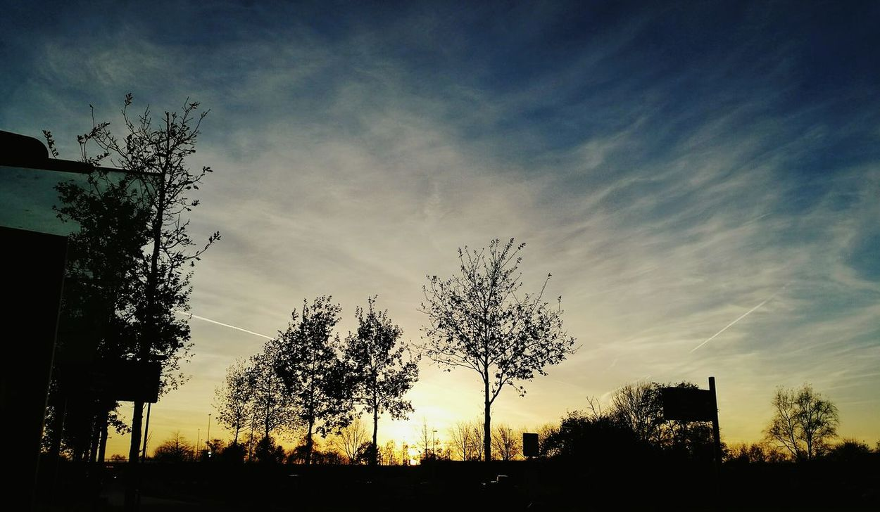 Sunset Silhouette Tree Sky Low Angle View Nature No People Beauty In Nature Outdoors Day Autumn Huaweiphotography HuaweiP9 Huawei P9 Leica Clouds View Netherlands