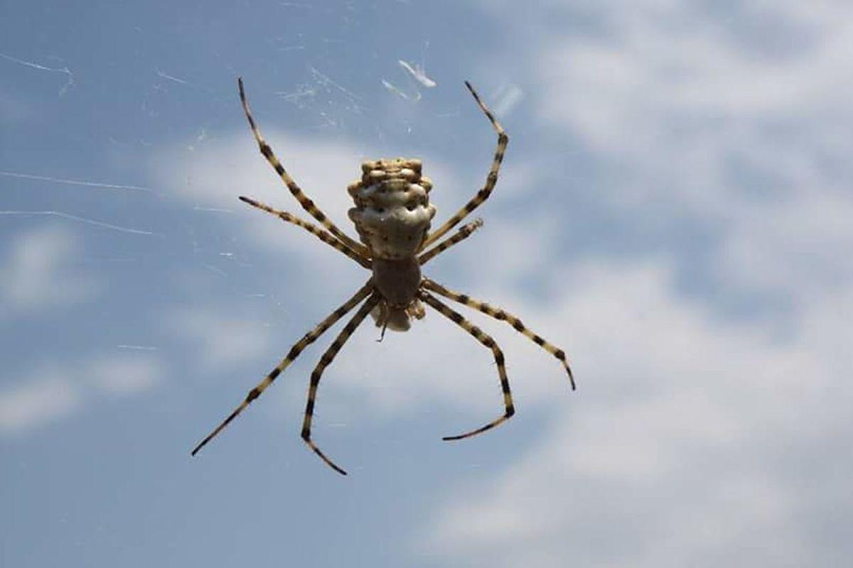 Spider Spiderworld Spiders Spider Nature_collection Eyenaturelover örümcek Ağı Örümcek Sanatı örümcekcik Populer Photos Nature Doğa Türkiye Naturelovers EyeEm Nature Lover First Eyeem Photo Orumcek