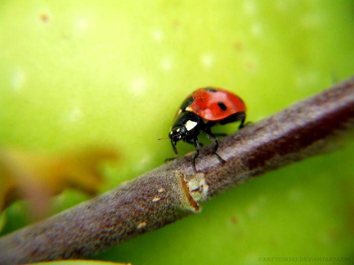 Macro Insect Ladybug Nature Poland Częstochowa Green Bug Closeup Macro Insects