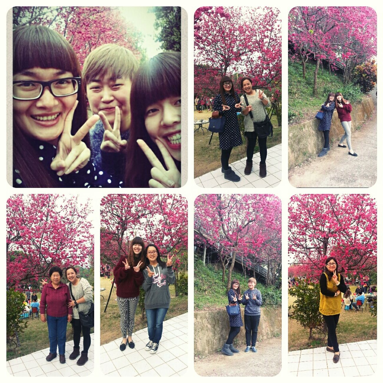 走春^ ^ Yunlin Sakura Flowers Family Time 劍湖山 Love