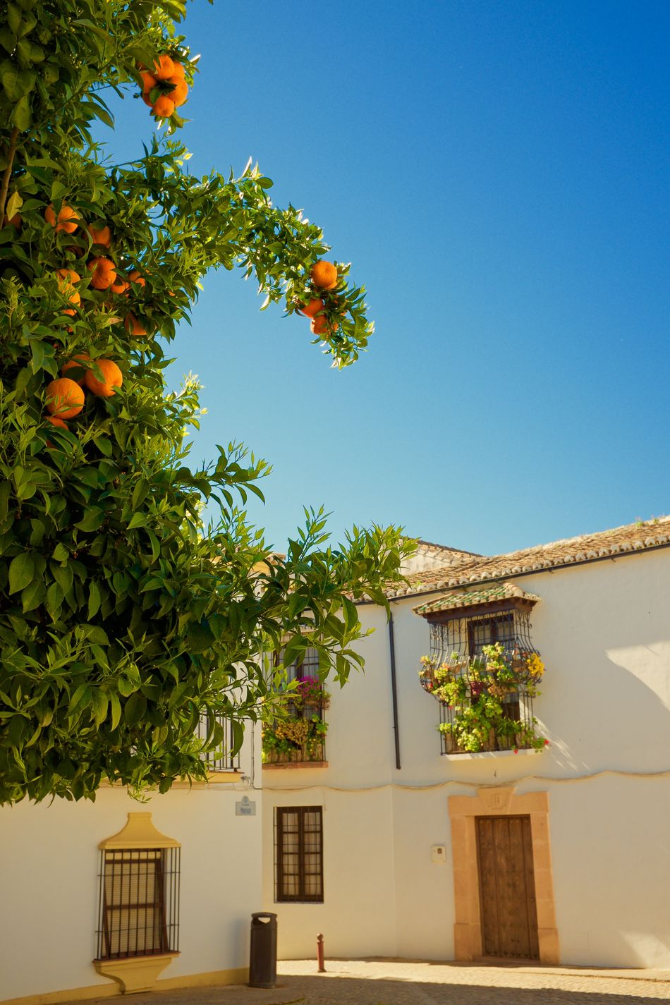 Orange Tree Plaza. Architecture Blanca Blue Building Exterior Built Structure Citrus Fruit Clear Sky Day Green Color Growth House Nature No People Orange Tree Outdoors Pueblos De España Residential Building Ronda, Malaga Sky Spain. Tree White Towns